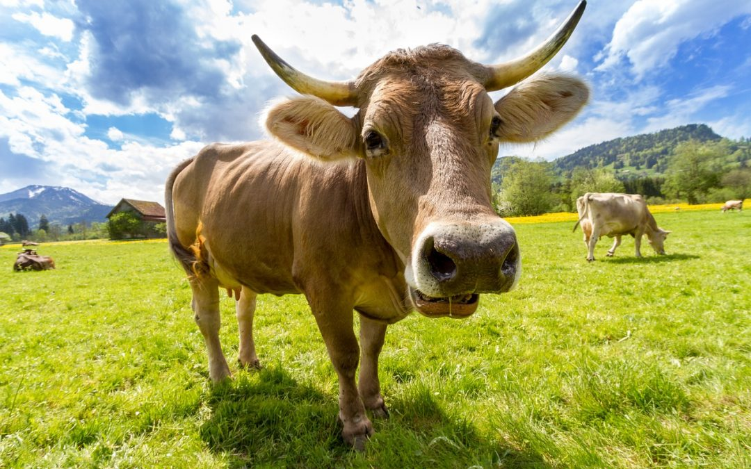 Does Meat or Dairy Cause Cancer?